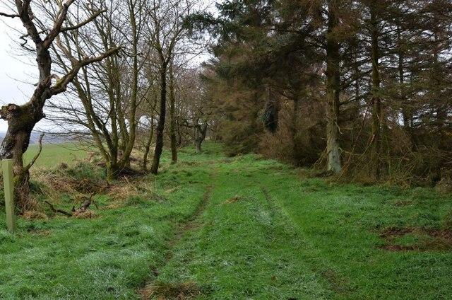 Track, Callyons wood