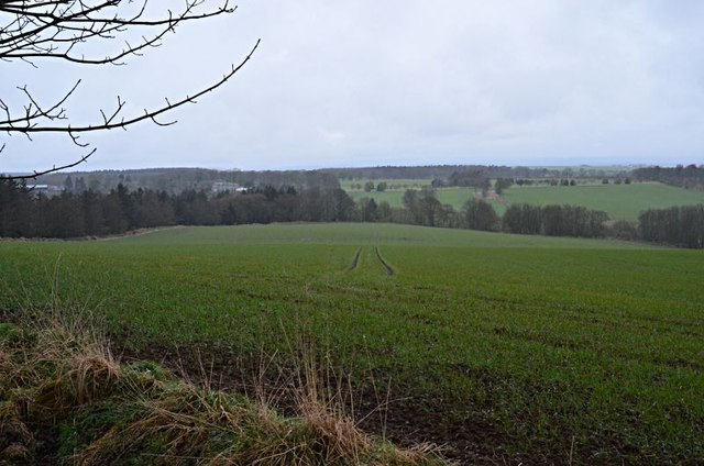 View north from Callyons wood