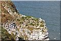 TA1974 : Upper Cretaceous Chalk cliff, Bempton by Pauline E