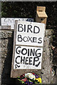 NY4465 : Cheep nest boxes for sale by Walter Baxter