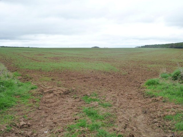 Corner of field, north of Lund Wood