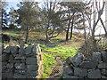 NZ0768 : Near Milecastle 16 by Ian S