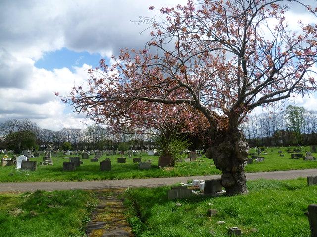 Meeting of paths in Streatham Cemetery