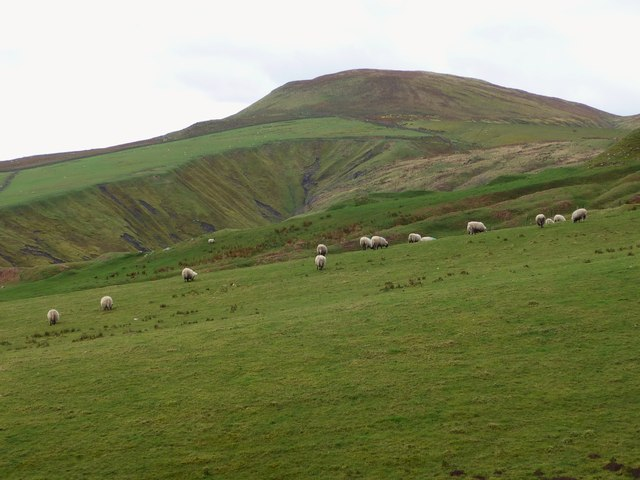 Sheep Grazing at Corrie