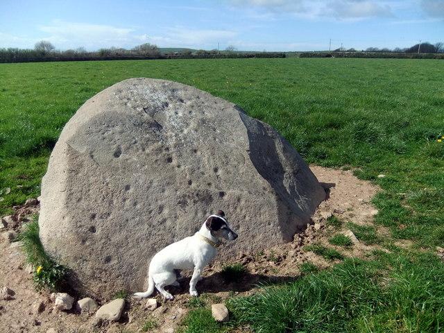 Trefael stone