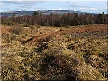 NS3778 : Old boundary on Carman Muir by Lairich Rig