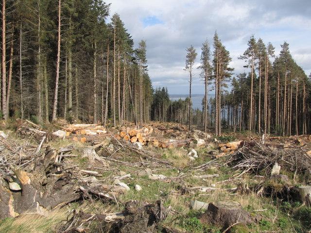 Logging in Donard Forest
