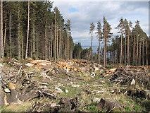 J3630 : Logging in Donard Forest by Eric Jones