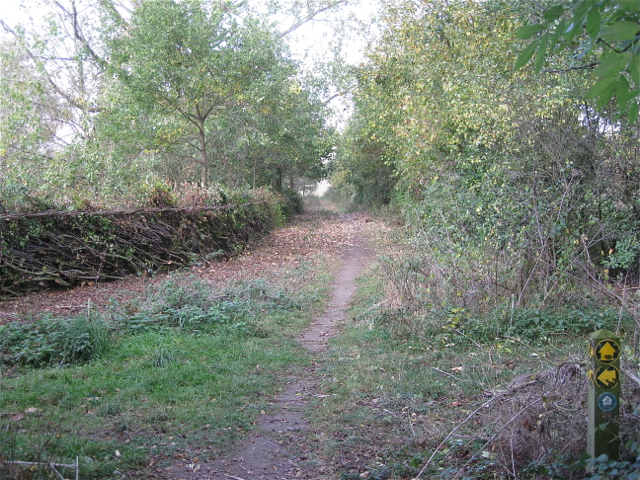 Footpath and laid hedge north from Smithy Lane
