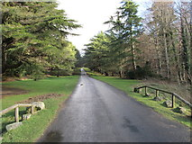 J3532 : View east along the Barbican Drive at Tollymore Forest Park by Eric Jones