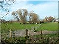 SU5685 : Willows near Lollingdon Farm by Des Blenkinsopp
