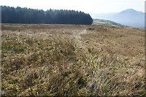 SH6443 : Boggy grassland west of Moelwyn Bach by Bill Boaden