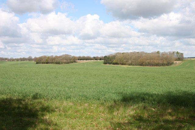Near Sole Common, Berkshire