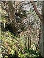 NY8060 : Overhang near Staward Peel by Oliver Dixon