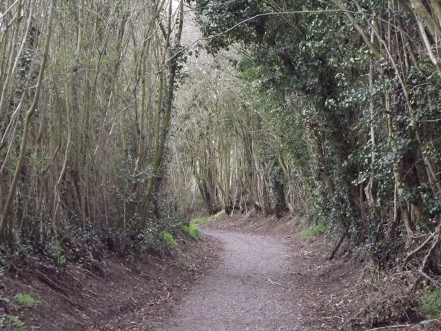 Coppicing on Ponds Lane
