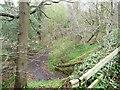 NZ1556 : Track through Priestfield Wood by Christine Johnstone