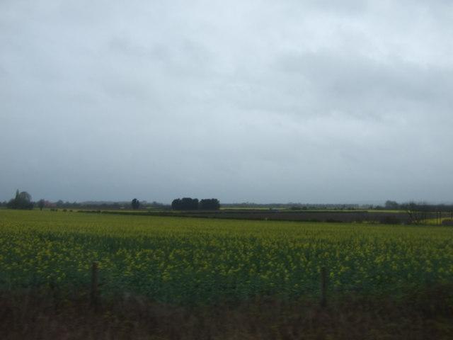 Farmland, Doddington Littlegate
