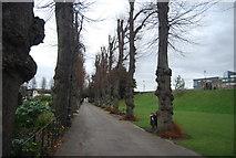 TR1457 : Dane John Gardens by N Chadwick