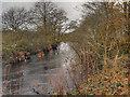 NN5101 : River Forth, Aberfoyle by David Dixon