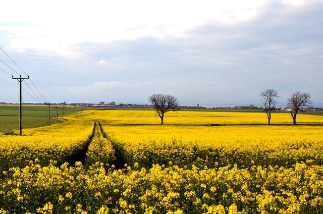 Pitkierie fields