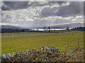 NS4689 : Loch Lomond View by David Dixon