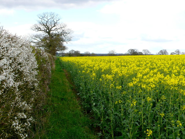 Field Margin at Turkey Farm