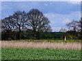SP2569 : Pipe Line Marker by Nigel Mykura