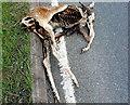 SP2751 : Roadkill by Nigel Mykura