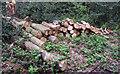 TQ4893 : Cut logs by Roger Jones