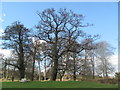 SP9908 : Trees stand out against the sky at Berkhamsted Castle by Chris Reynolds
