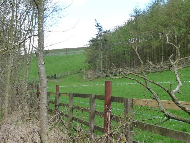 Farmland and plantation, Browney valley