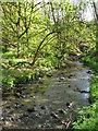 SJ3776 : Rivacre Brook by Sue Adair