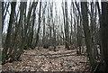 TQ6126 : Hawksden Park Wood by N Chadwick