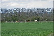SE7466 : Narrow pasture by Kirkham Park Wood by Pauline E