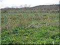 SE7566 : Newly planted saplings by Pauline E
