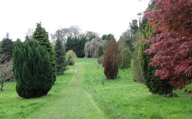 Walkway in the Castlewellan Arboretum