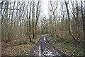 TQ6126 : Footpath, Hawksden Park Wood by N Chadwick