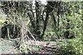 SU4867 : Well overgrown by Bill Nicholls