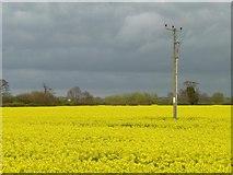 SK1515 : Telegraph pole in oilseed rape field by Christine Johnstone