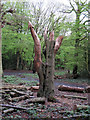TQ4793 : Hainault Forest Tree Sculpture (2) by Roger Jones