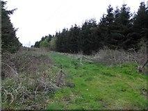 H3515 : Forest near Aghavilla by Kenneth  Allen