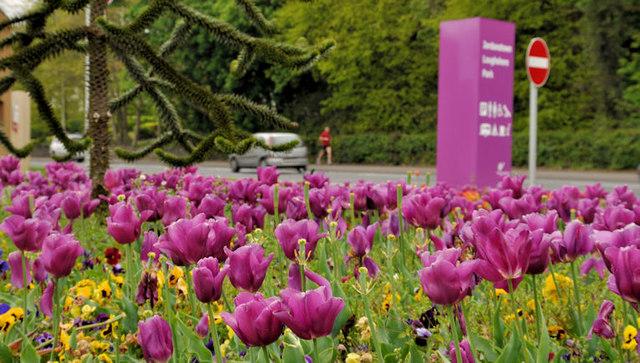 Tulips, Jordanstown, Newtownabbey
