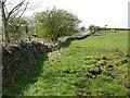 NY6166 : Field at Slack House Farm by Oliver Dixon