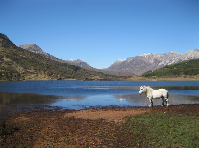 Highland pony at Loch Coulin