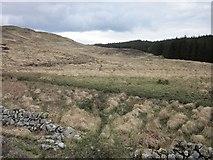 NR7467 : Wet ground by Patrick Mackie