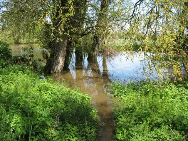 Flooded willow wood