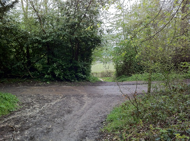 Denbies Drive in Ashcombe Wood