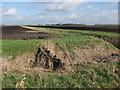 TL6590 : Bridleway across Feltwell Anchor by Hugh Venables