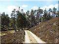 NO1794 : Forest edge, Invercauld by Alan O'Dowd