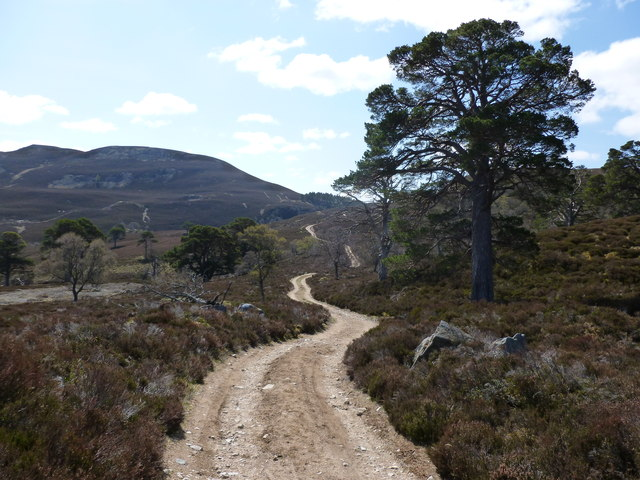 Woodland remnants by the Bealach Dearg track